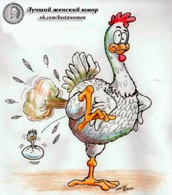 смешные картинки с курицей и с надписью этом видео