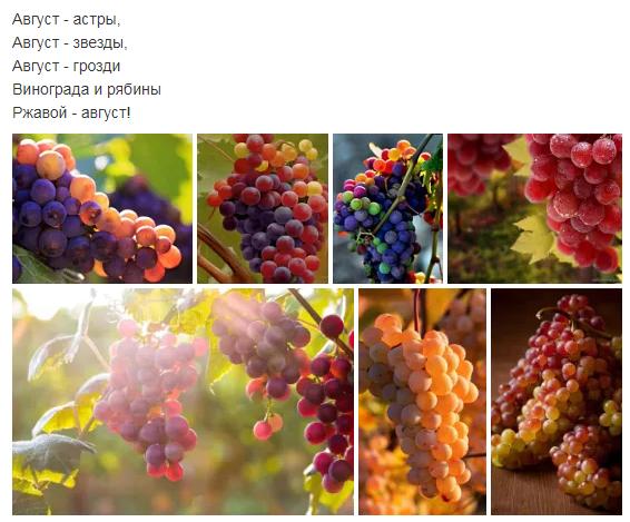 Картинка гроздья винограда и рябины ржавой август