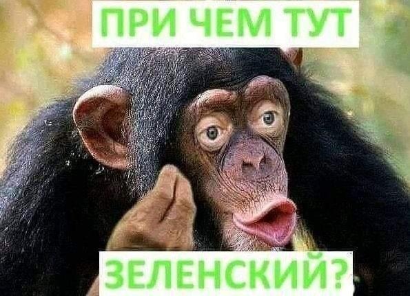 """""""Похоронна процесія по санкціях"""", - Безсмертний прокоментував зустріч Путіна і Макрона - Цензор.НЕТ 8552"""